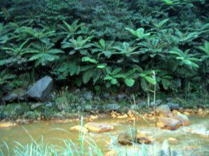 jinshan travel baian Wild stream springs 08 1