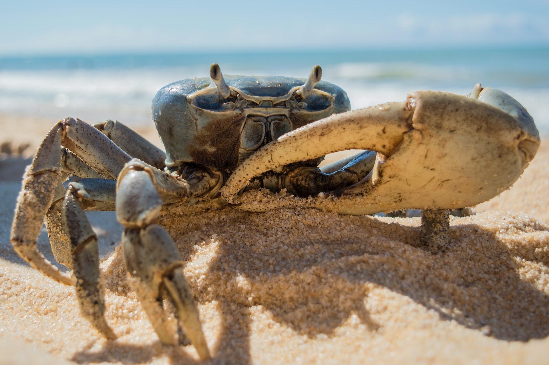 斐濟人的螃蟹食譜料理法(無水)